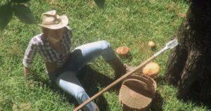 Mushrooms: Forest Walker เกมออนไลน์ Open World Survival